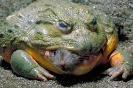 toad4.jpg