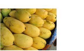 mango bad