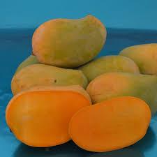 mango k