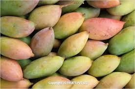 mango tp